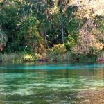 freshwater springs near Gainesville