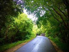 Gainesville trails
